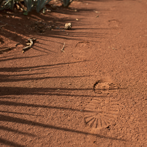 Footprint at red soil in Arandas, blue agave cactus, blue agave alcohol, agave azul plant, mexican agave plant,